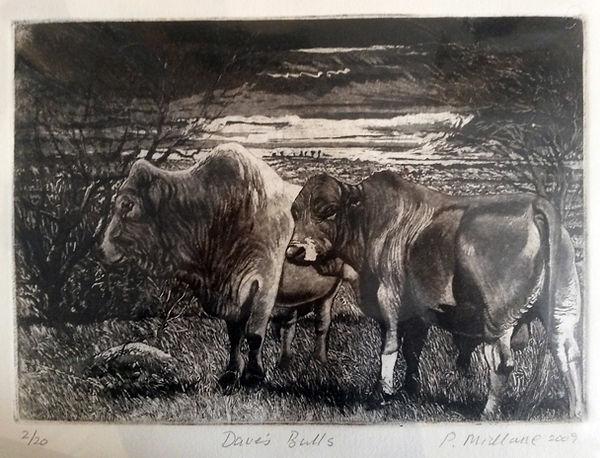 daves-bulls.jpg