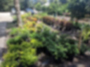 nursery pic-3.jpg