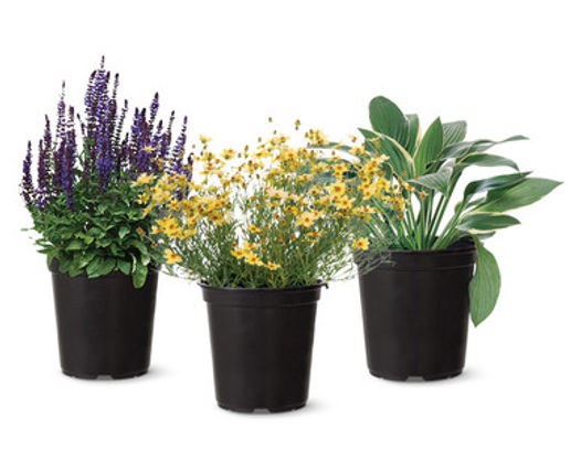 one gal perennials.jpg