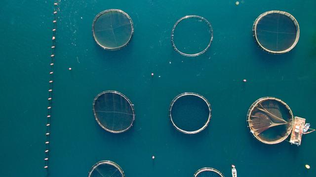 Aerial photo of fishing nets at Kotor Bay, Montenegro