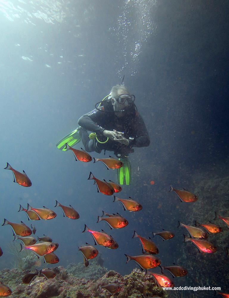 Дайвер на острове Пхи Пхи. Дайвинг на Пхукете