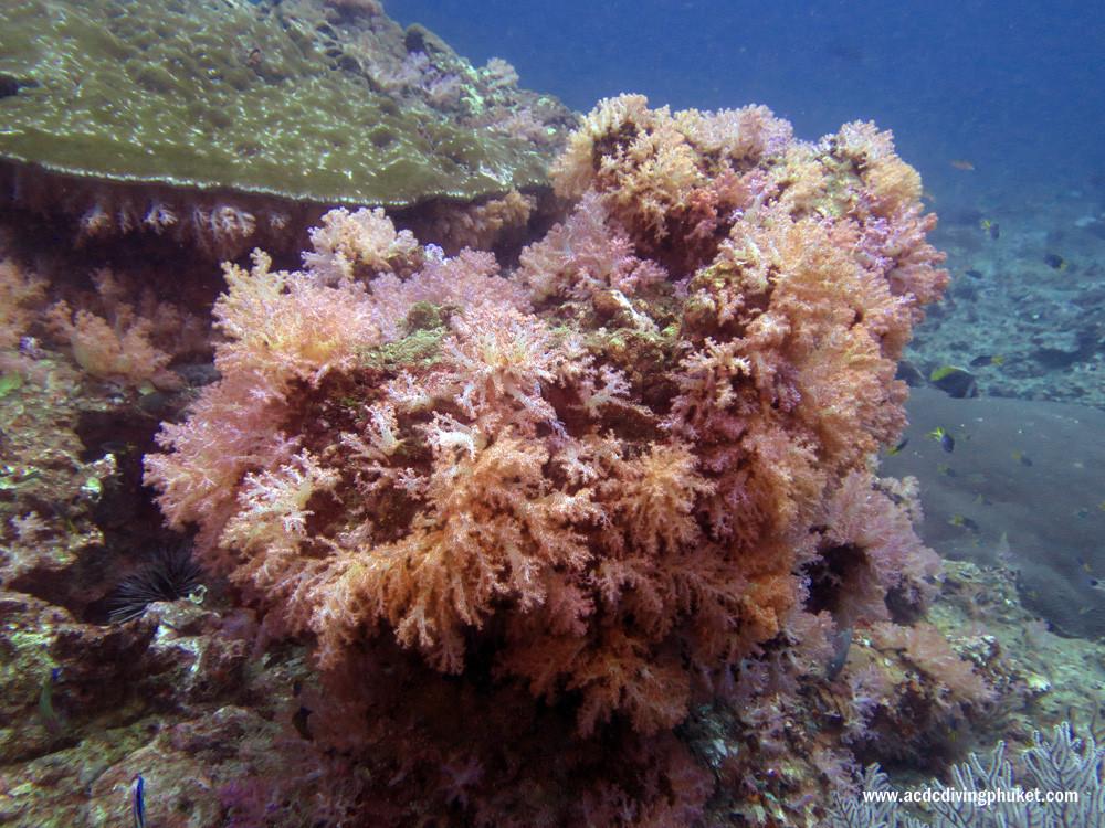 Кораллы на острове Пхи Пхи Лей. Пхукет, Таиланд