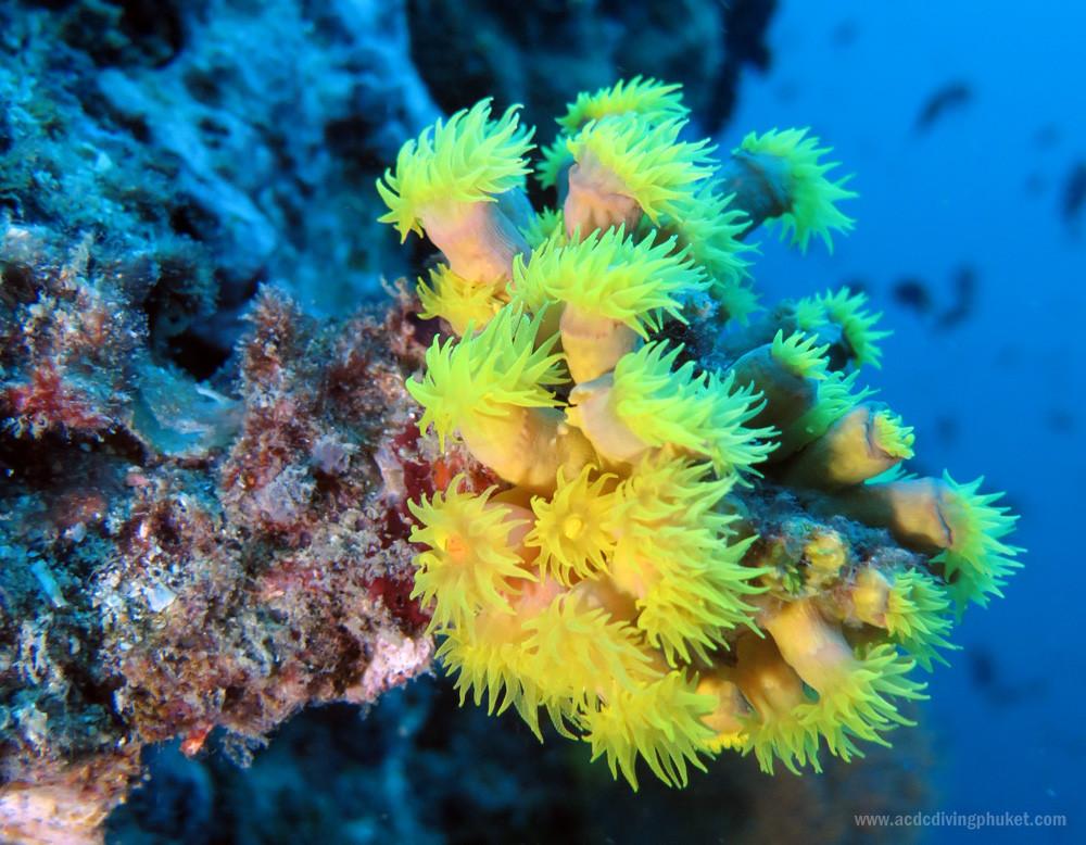 Кораллы на стенках острова Ко Док Май