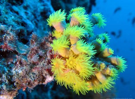 Кораллы на Пхукете есть!