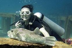 PADI Scuba Diver, Курс PADI Scuba Diver, PADI Scuba Diver Пхукет, Курсы дайвинга на Пхукете, обучение дайвингу на Пхукете