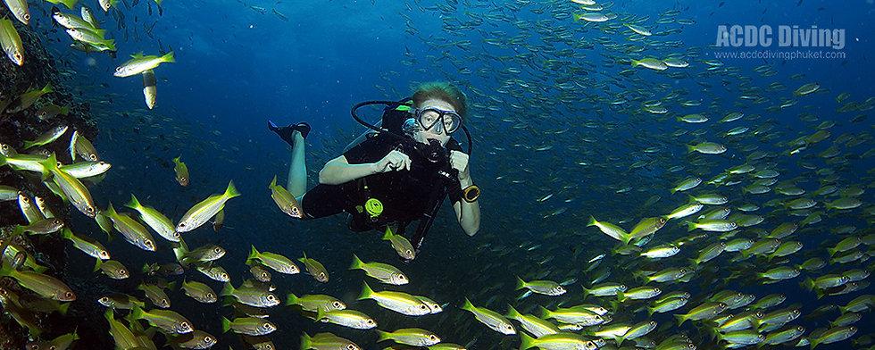PADI OWD, курс PADI Open Water Diver на Пхукете, Курс PADI Open Water, курс дайвинга OWD, OWD, Курсы PADI,  PADI Open Water Пхукет, SSI, SSI Open Water, Курс SSI OWD