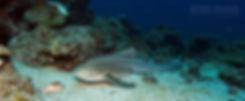 Пхи Пхи Дайвинг, Дайвинг на Пхи Пхи, Погружения на Пхи Пхи, Острова Пхи Пхи дайвинг, Понырять на Пхи Пхи, Нырялка на Пхи Пхи, Phi Phi Diving