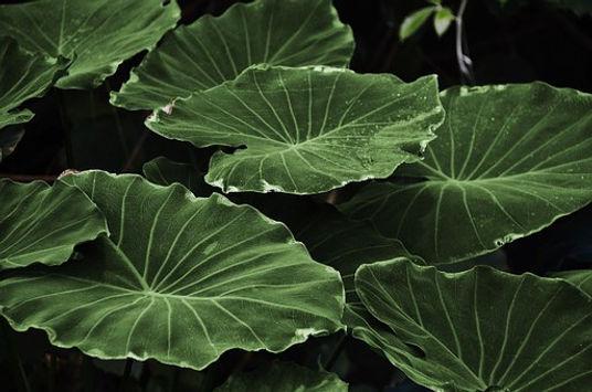 leaf-318743__340.jpg