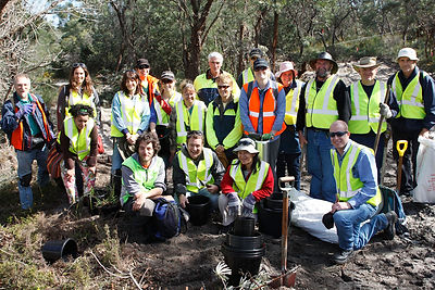 Group rescueing plants prior to clearing native vegetation at Fiona Stanley Hospital, Murdoch, WA