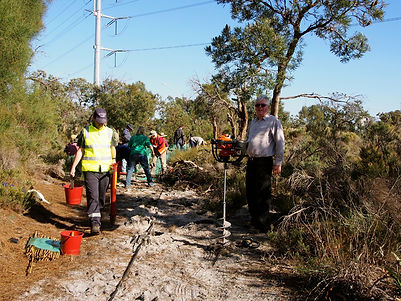 Using auger to drill holes to plant tubestock at Ken Hurst Park, Leeming WA