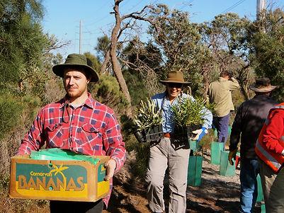 Bringing in tubestock to plant at at Ken Hurst Park, Leeming WA
