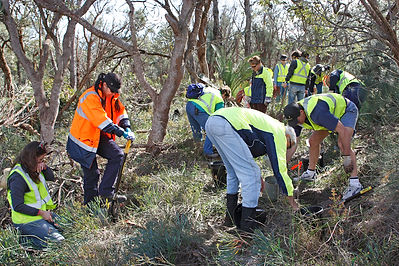 Volunteers digging up plants to rescue native vegetation at Fiona Stanley Hospital, Murdoch, WA