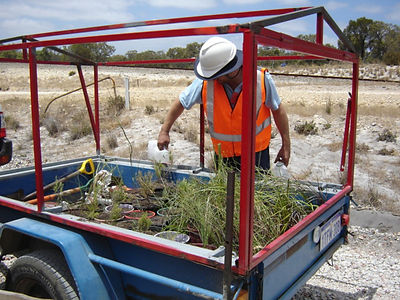 Plants rescued from clearing of native vegetatlion at Fiona Stanley Hospita, Murdoch, WA, in a trailer