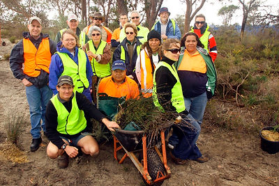 Group with plants rescued from cleartign of native vegetation at Fiona Stanley Hospital, Murdoch WA