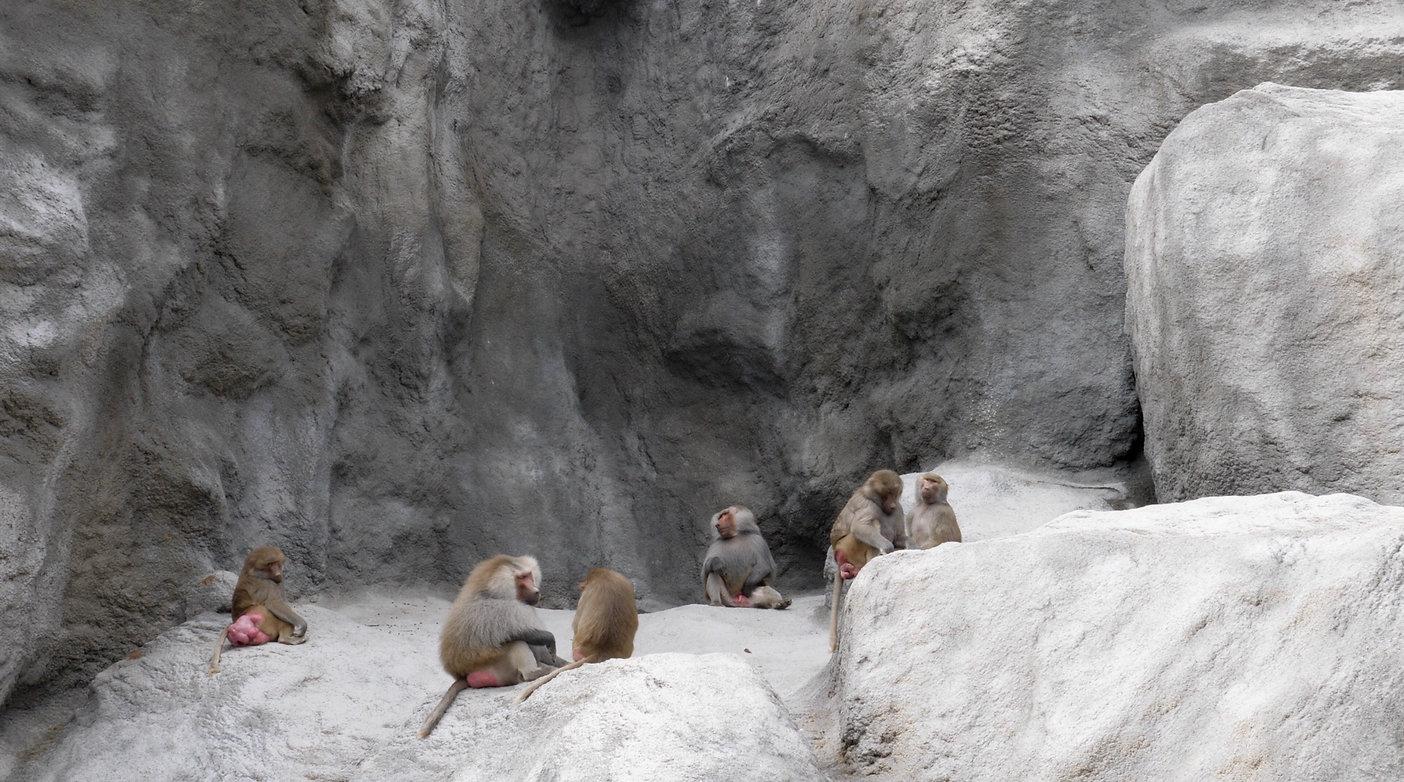 baboonszoowebsite.jpg