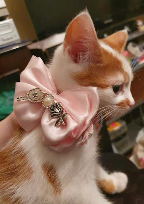 kitten wearing pink satin bow collar with charms