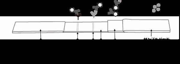 測定原理図.png