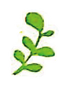 野菜パン素材-21.png
