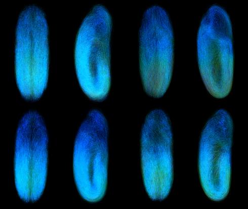 Drosophila reconstruction