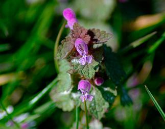 Cursus wilde planten