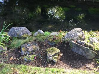 Rocks by water
