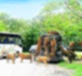 Safari-world-tour-with-Marine-Park.jpg