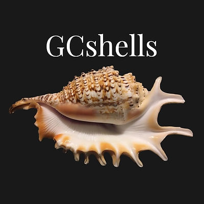 GCshells shirt design.jpg