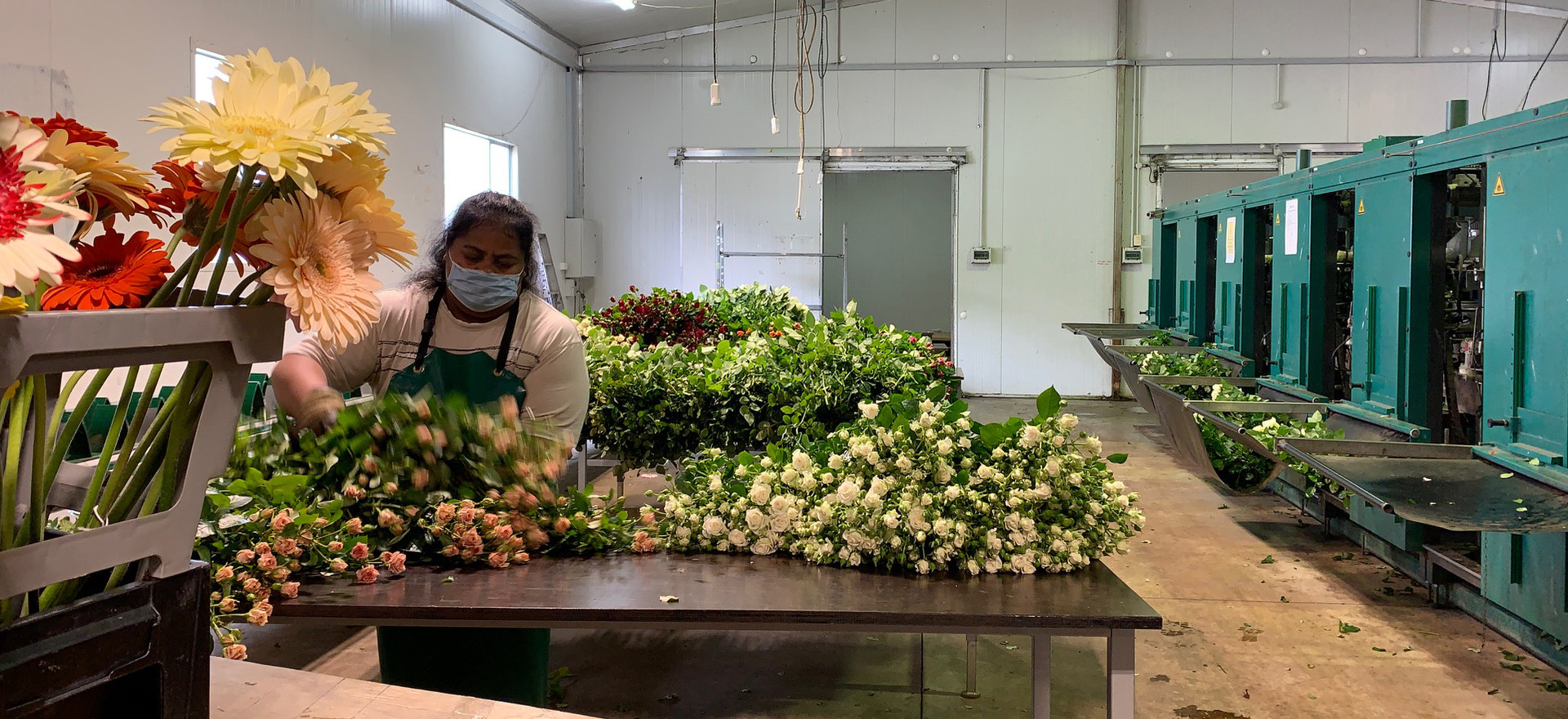 Taareta sorting flowers
