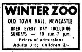 Winter Zoo Advert, 2019