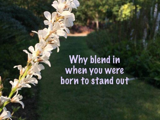 Why blend in when you were born to stand out