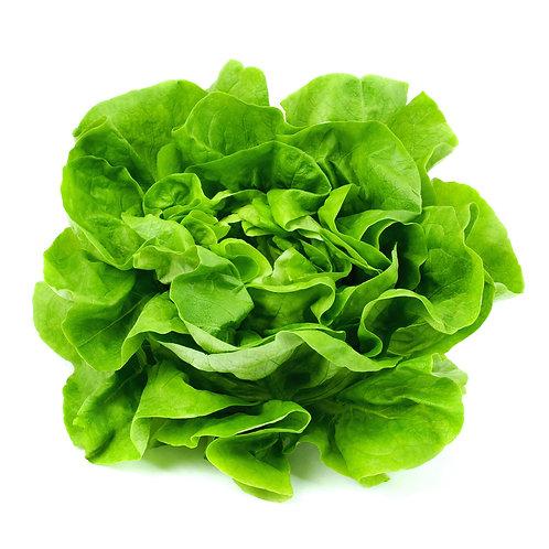 Lettuce / ct