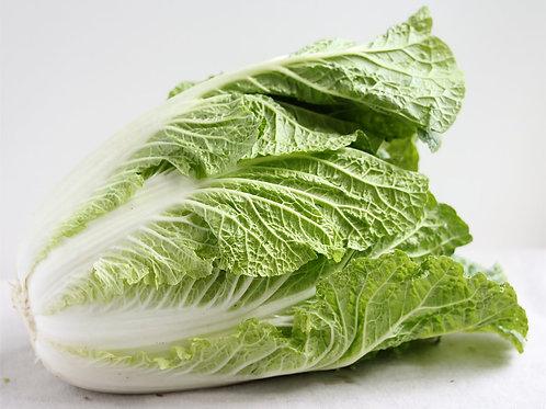 Napa Cabbage/ct