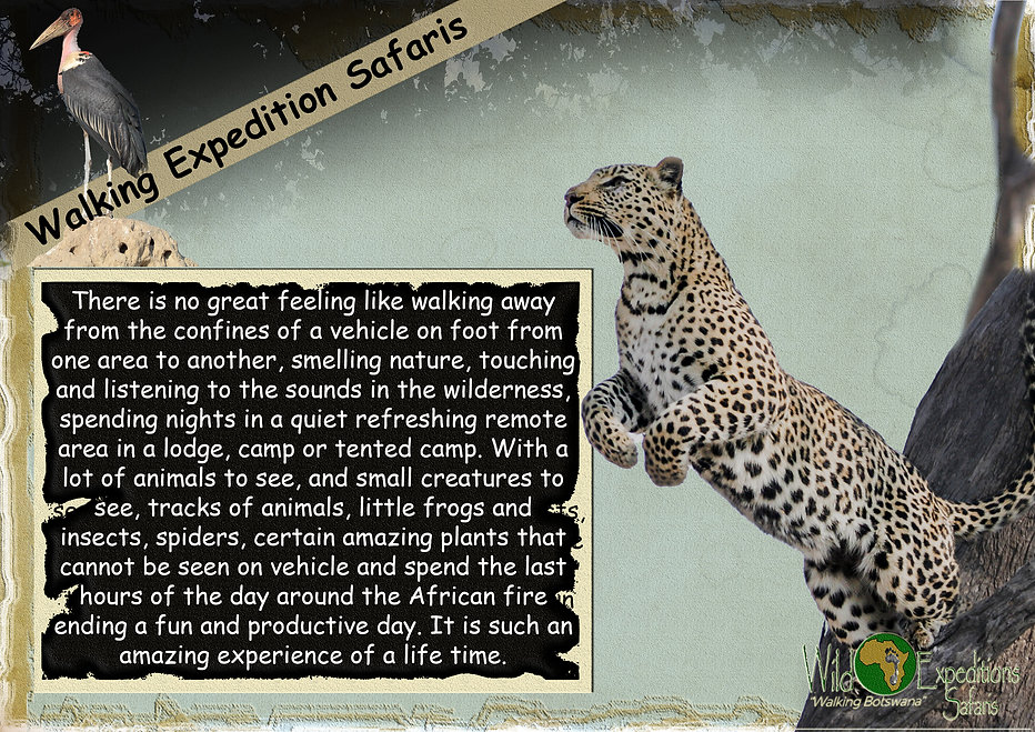 Walking Expedition Safaris.jpg