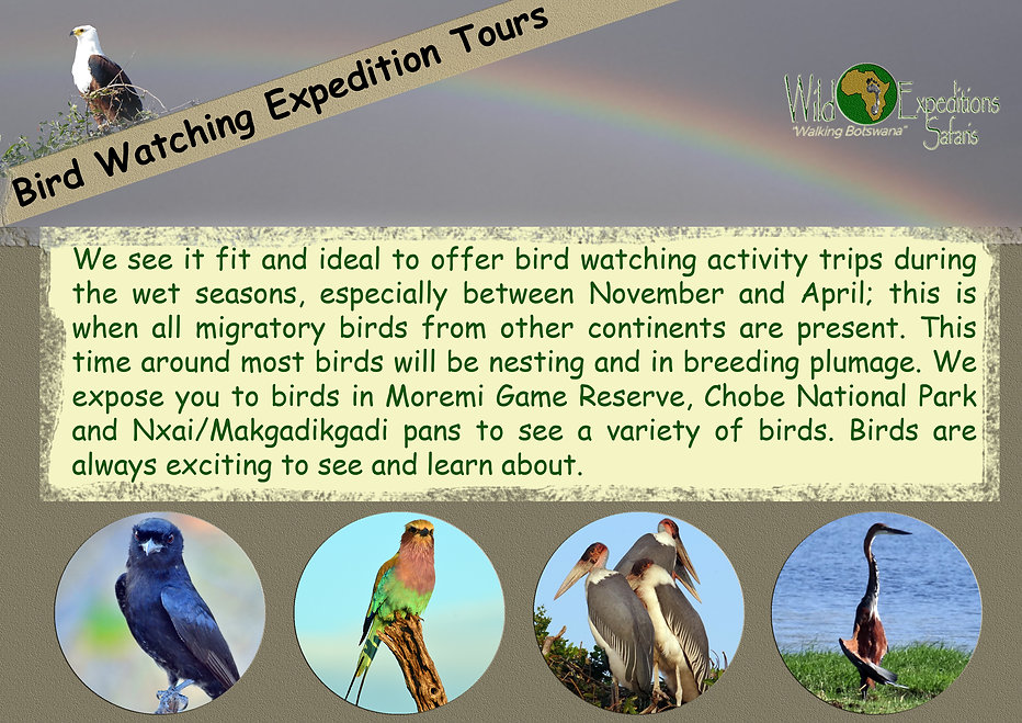 Bird Watching Expedition Tours.jpg