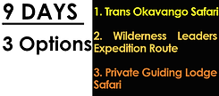 9 Nights Options.png