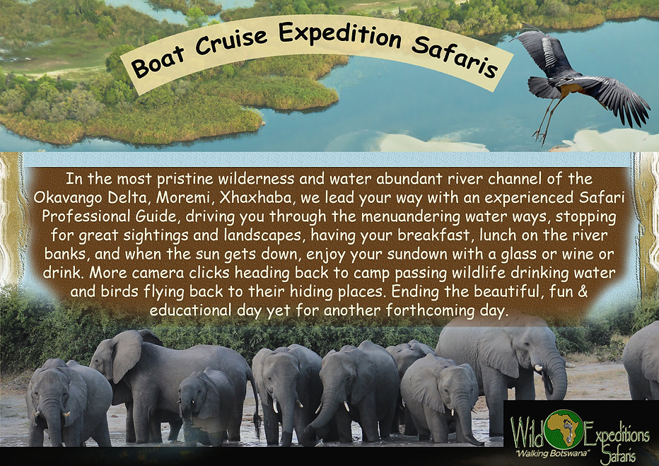 Boat Cruise Expedition Safaris.jpg