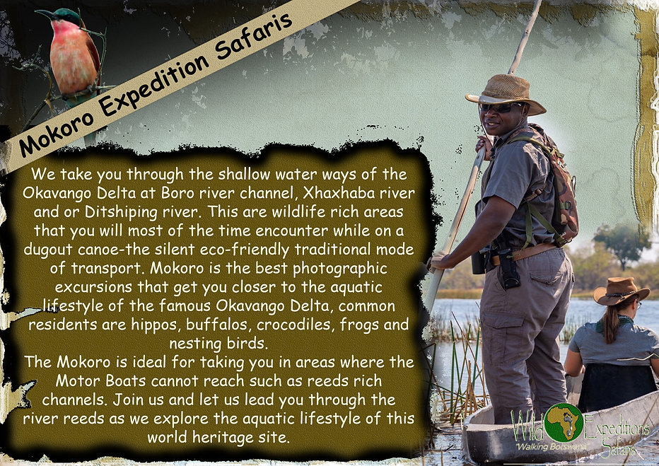 Mokoro Expedition Safaris.jpg