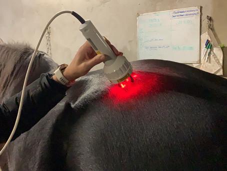 Die Lasertherapie bei Pferden