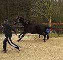 Horsemanship Thumbnail 3.jpeg