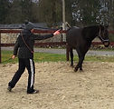 Horsemanship Thumbnail 1.jpeg
