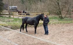 Pferdegestützes Coaching
