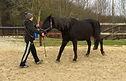 Horsemanship Thumbnail 4.jpeg
