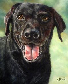 Chester black labrador pastel