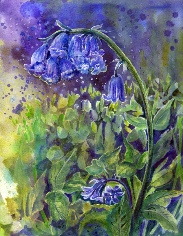 Bluebell Time