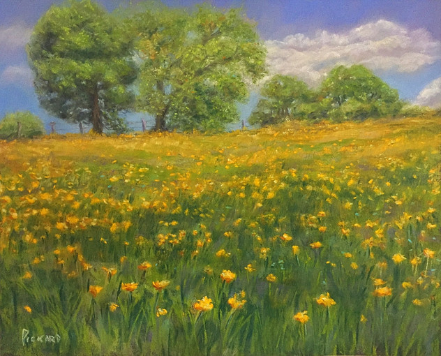 Sundrenched Meadow