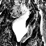 Ağacın Gözü / Eye of the Tree