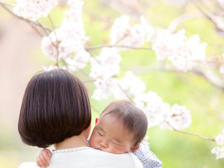 桜の頃の写真です