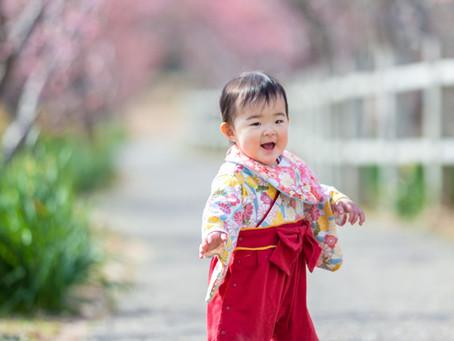 安定している河津桜