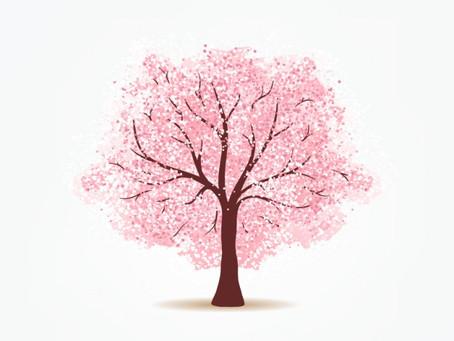 2019年の桜の撮影につきまして