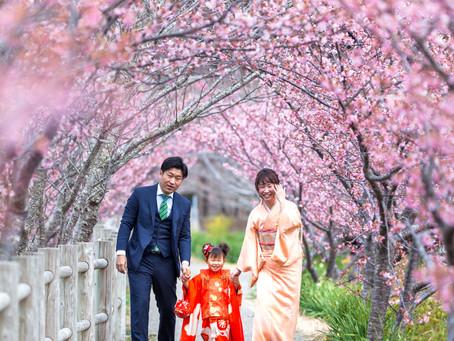 最後の河津桜